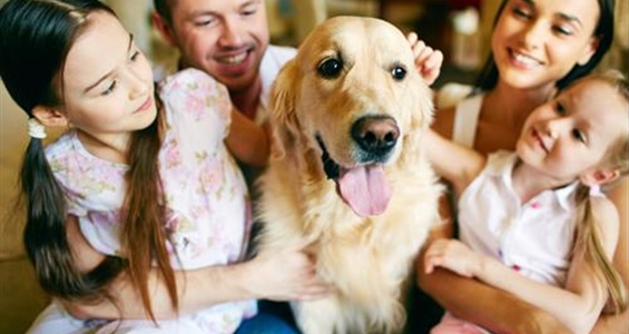 How to Prepare for Houseguests Who Have Pets