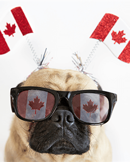Top Activities to Celebrate Canada Day 2020